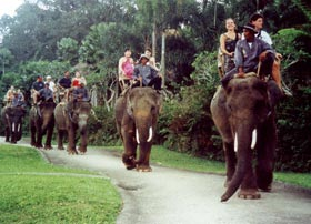 Elephant Ride Safari in Bali – Adventure in the Forest