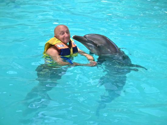 Hasil gambar untuk melka hotel swim with dolphins